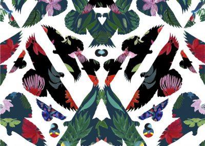 butterfly birds